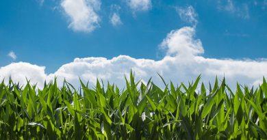 Rijk en provincies eens over beleidsregels stikstofaanpak