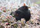 Schoonmaken en renovatie vogelhuisjes Spaarbankbos