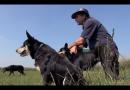 Bordje Cultuur: De stress van de herder