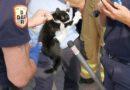 Kitten neemt brandweer in de maling