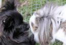 Gevonden en vermiste dieren: Amivedi week 26