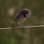 Opinie roofdieren en weidevogels