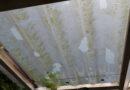 Enorm veel schade na hagelbui met stenen van meer dan 4 centimeter