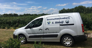 Blauwe bes plukseizoen is weer begonnen bij Blokzijl in Nieuwlande