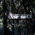 Opinie: Bos in de uitverkoop